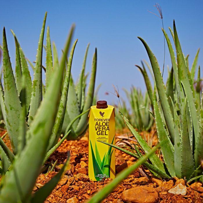 Program de Detoxifiere de 9 zile - Produse Forever Slabit cu Aloe Vera